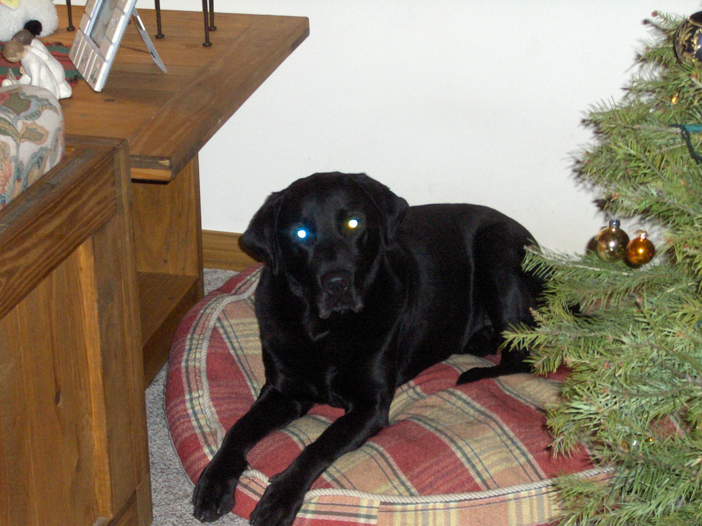 I LOVE my puppy!!!!-christmas-2005.jpg