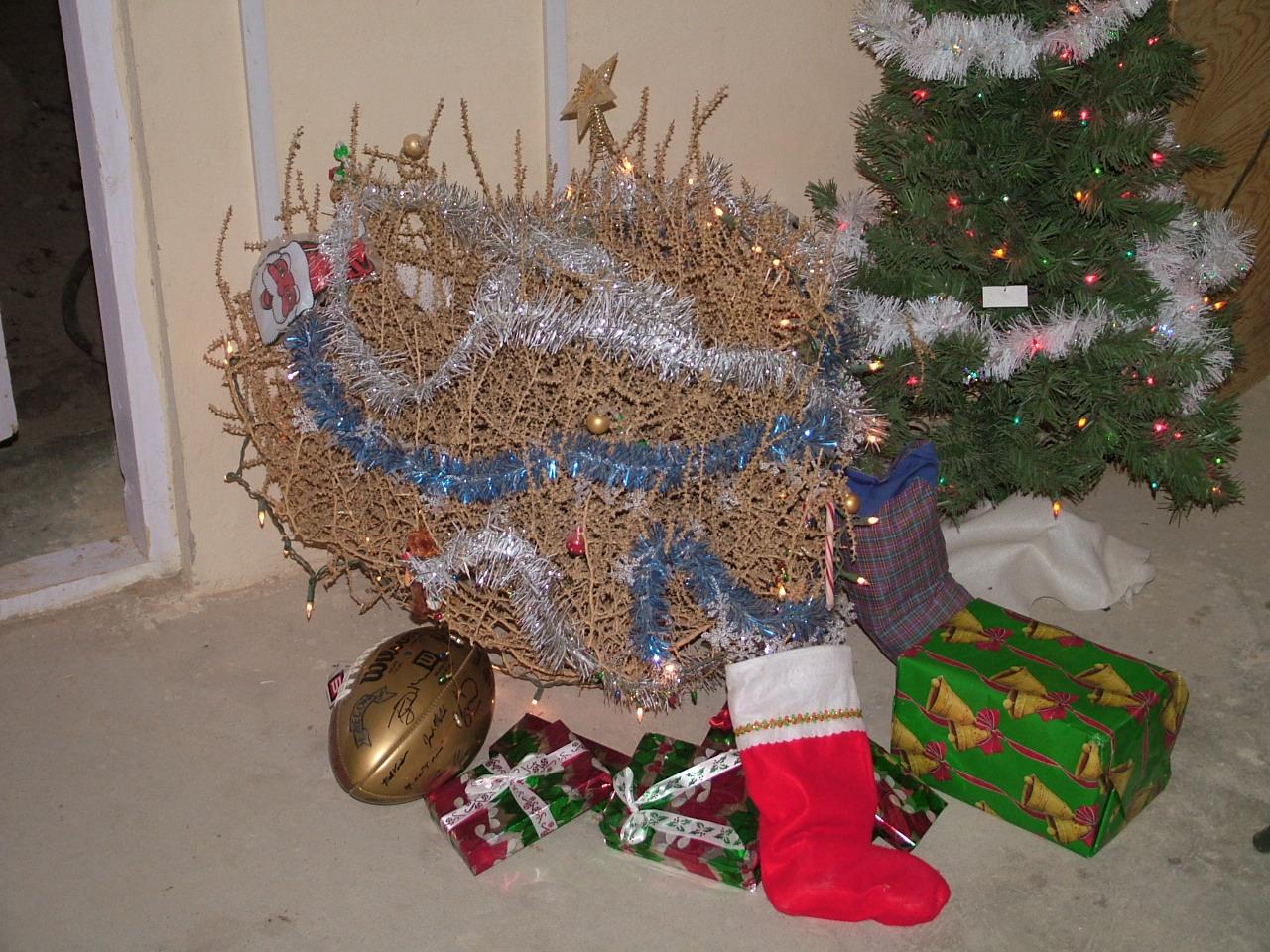 Pic of the month?-christmas-tumbleweed.jpg