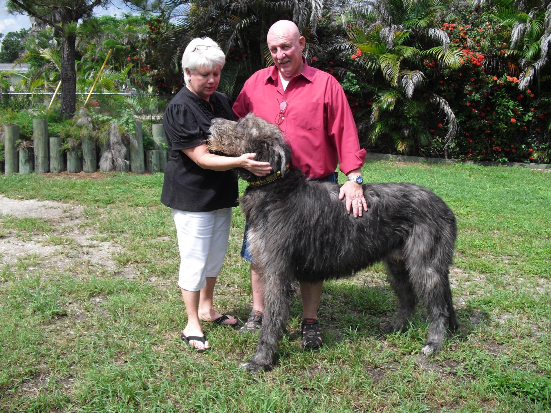 Our New Irishwolfhound Pup...-cimg0117.jpg