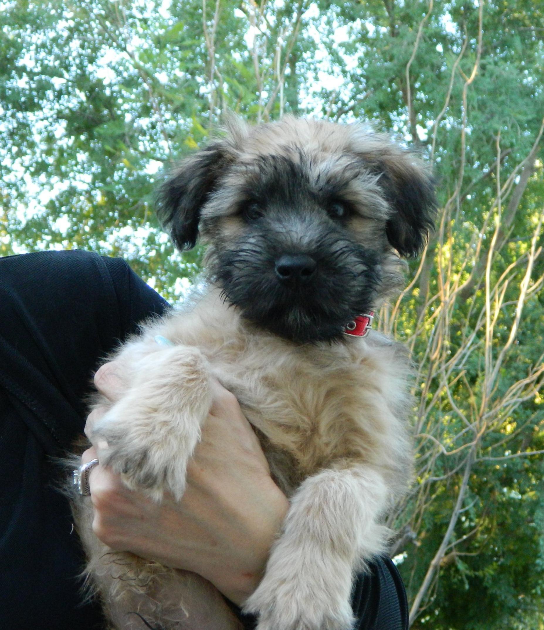 Critter pics / Pet Thread: Dial Up Beware-clancy-pup.jpg