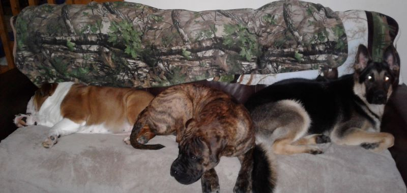 How About A Pet Picture Thread: Dogs, Cats, ...-couch-3-.jpg
