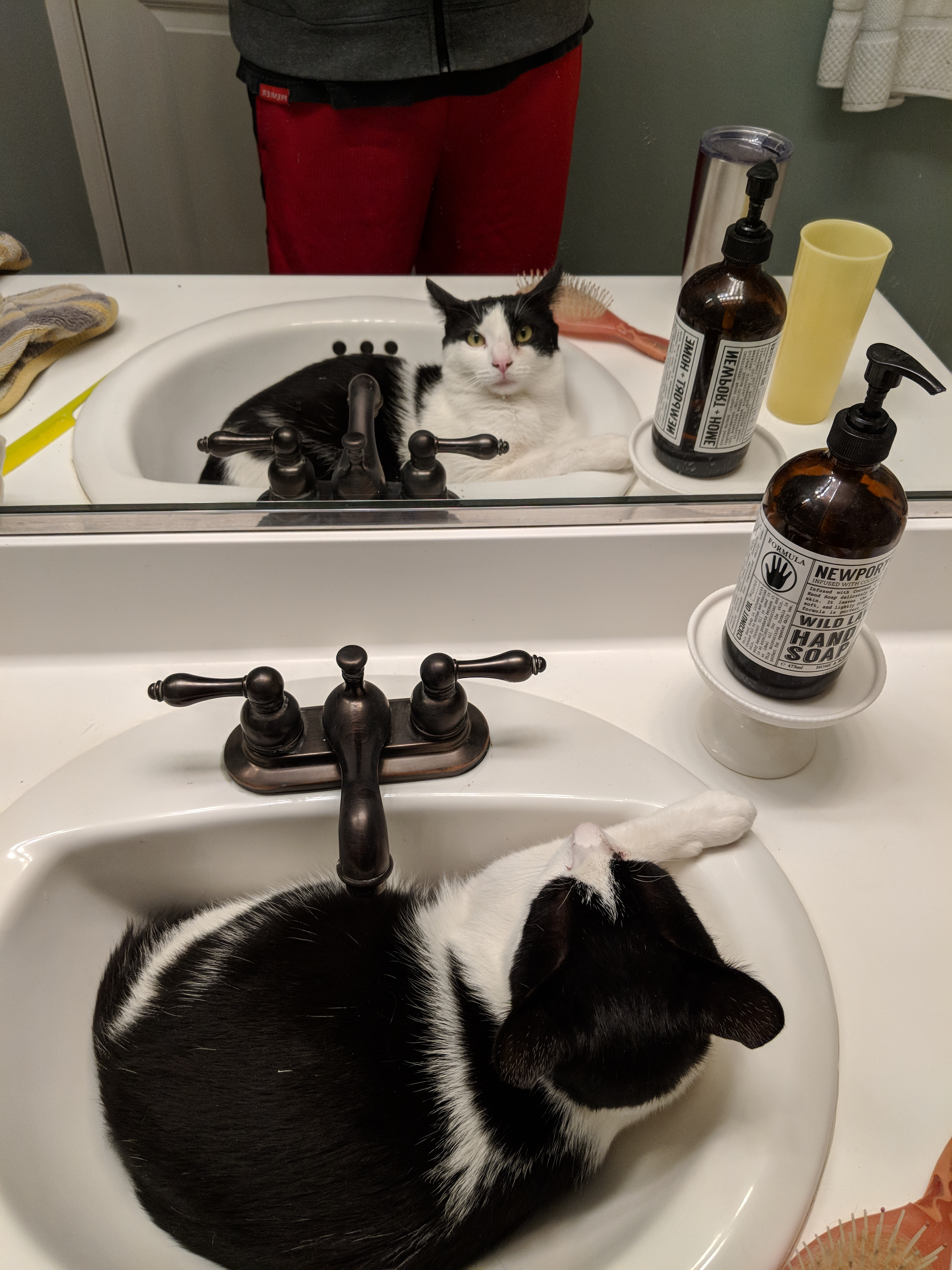 How About A Pet Picture Thread: Dogs, Cats, ...-cowboys-sink.jpg