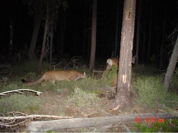 newbie wilderness carry question-dead-deer-walking.jpg