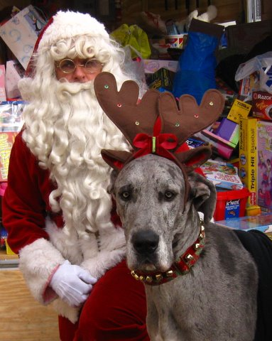 Adoptions -- fail and accidental success-december_2009_014.jpg