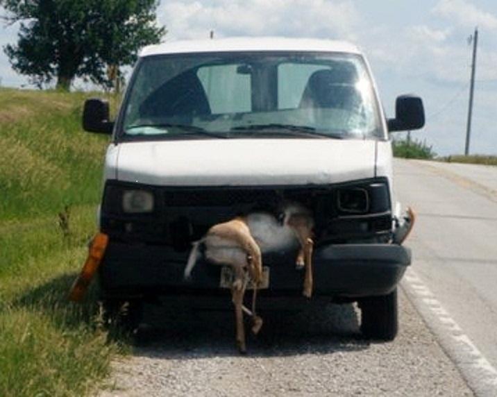 Montana -  'you kill it, you grill it' law.   Yummy in my Tummy!-deer.jpg