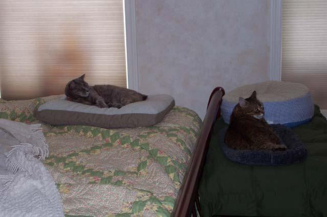 Critter pics / Pet Thread: Dial Up Beware-dexie-biscuit.jpg