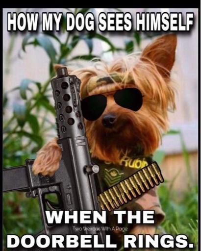 Random Thoughts (Part2)-dog-doorbell.jpg