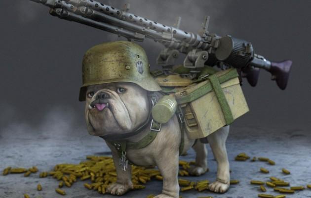 Dog Rules-dog.jpg