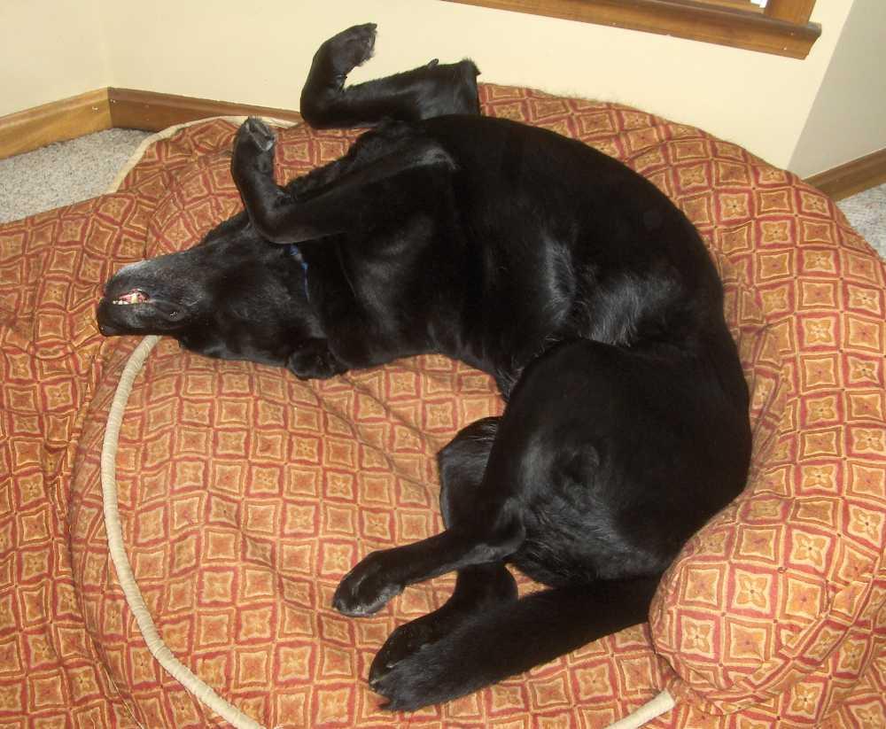 Snoring dog.-dog1.jpg