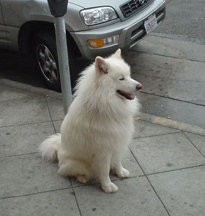 Almost shot a dog, scared the owner, too-dog121.jpg