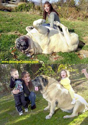 I love my dogs-dog_1.jpg