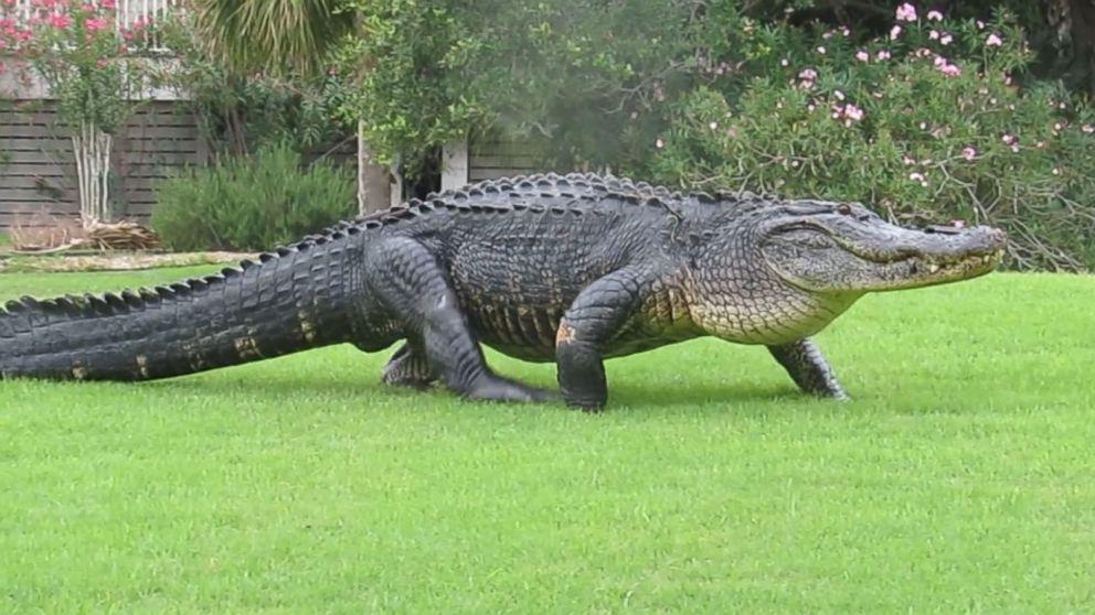 Gator Loads?-download.jpg