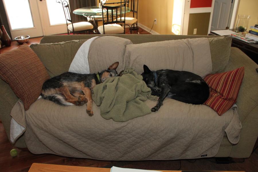 Dog Rules-dpp_2482.jpg