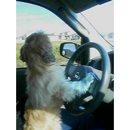 I LOVE my puppy!!!!-driving-bits.jpg