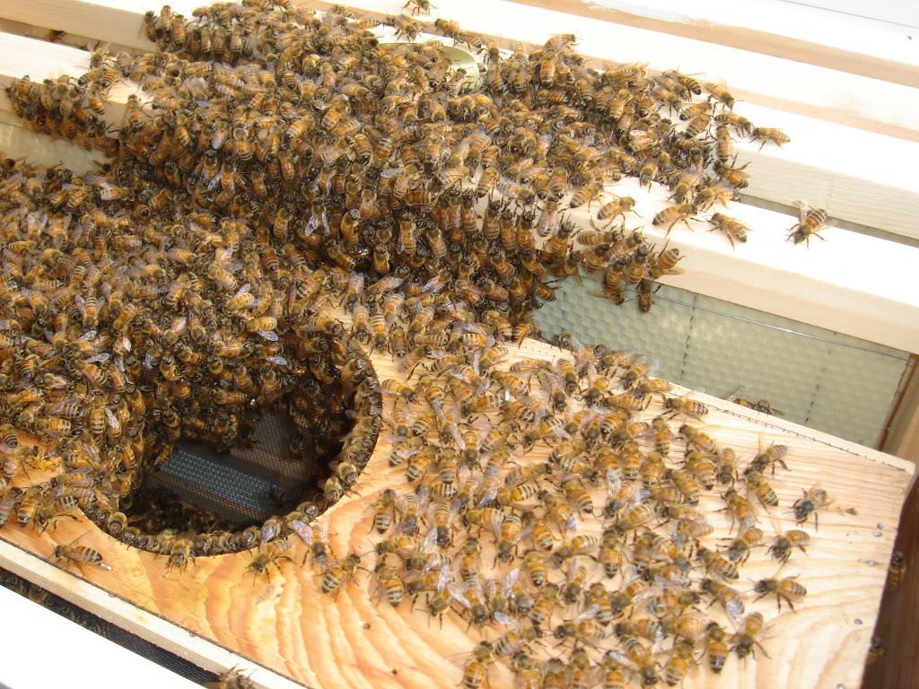 Anybody make honey in case of a SHTF scenario?-dsc03740.jpg