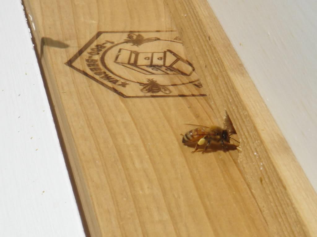 Anybody make honey in case of a SHTF scenario?-dsc03752.jpg