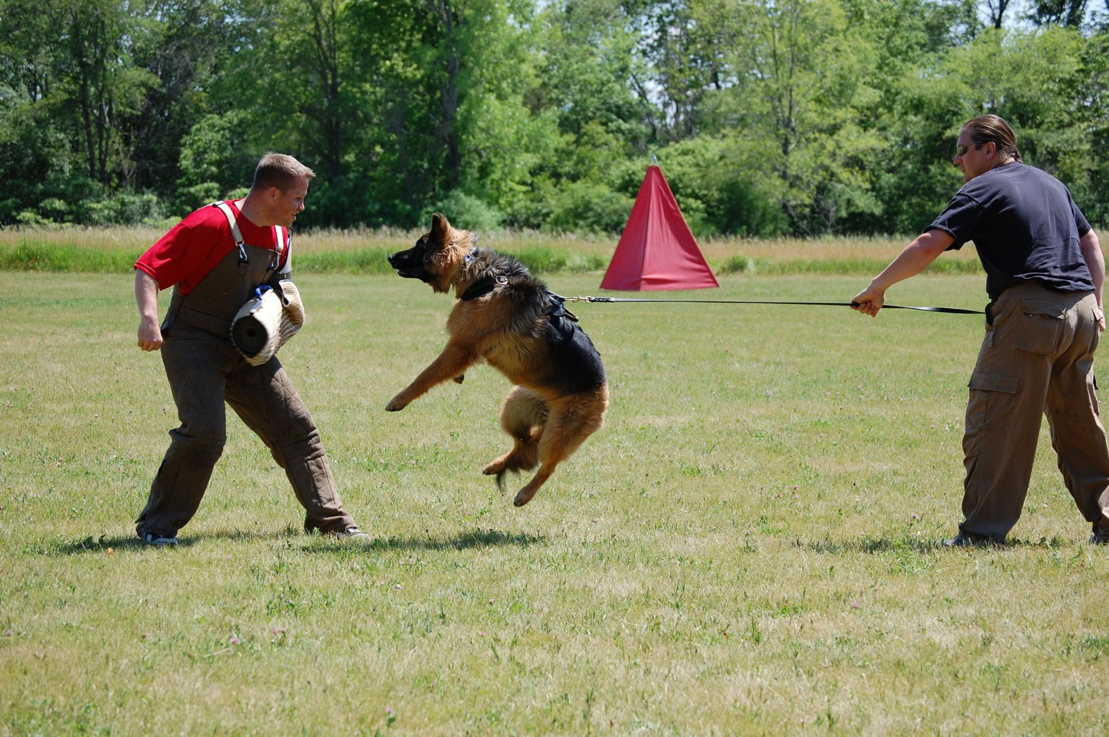 Dog(s) as part of your Home Defense-dsc_0074.jpg
