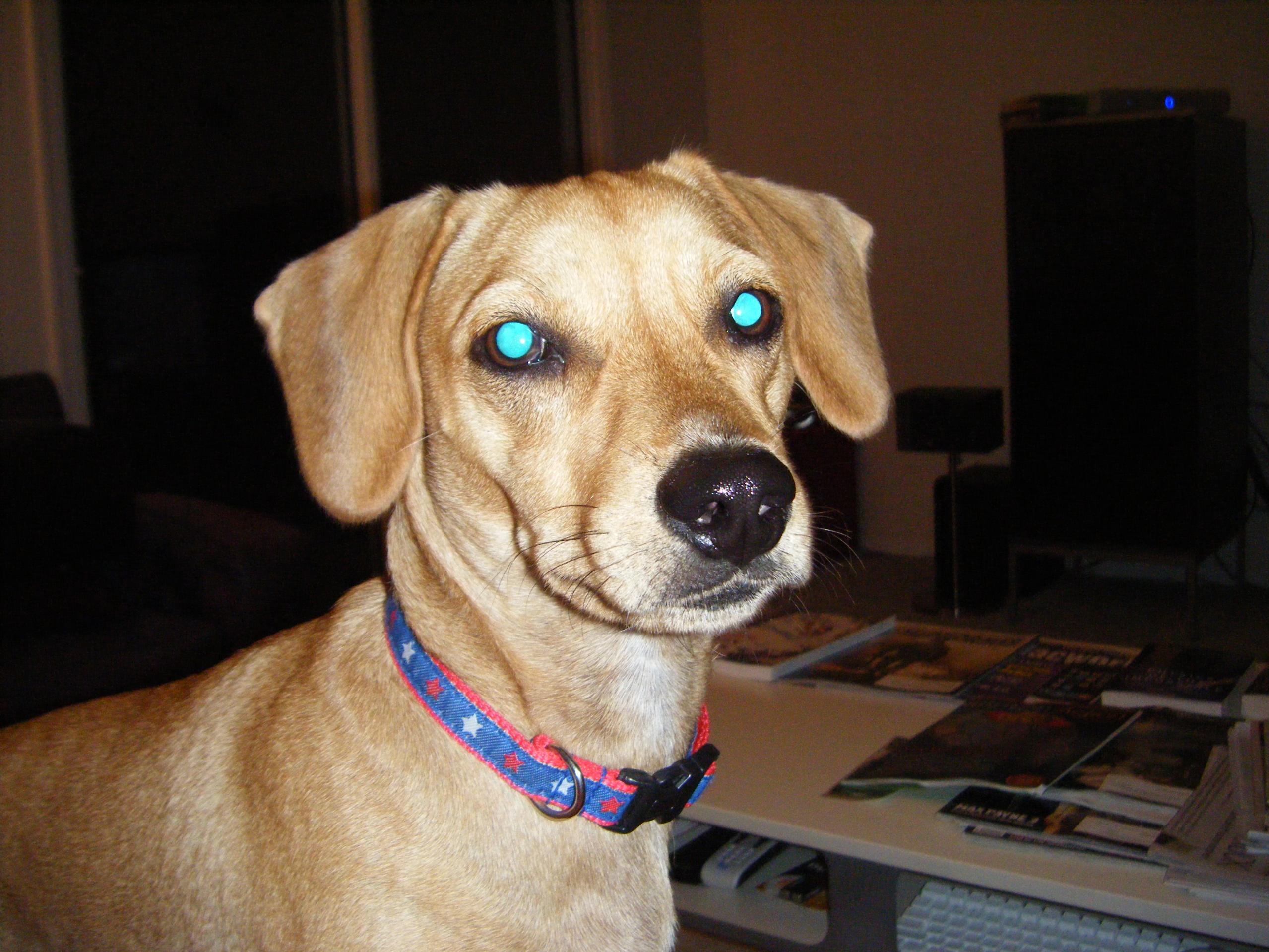 I LOVE my puppy!!!!-dscf0233.jpg