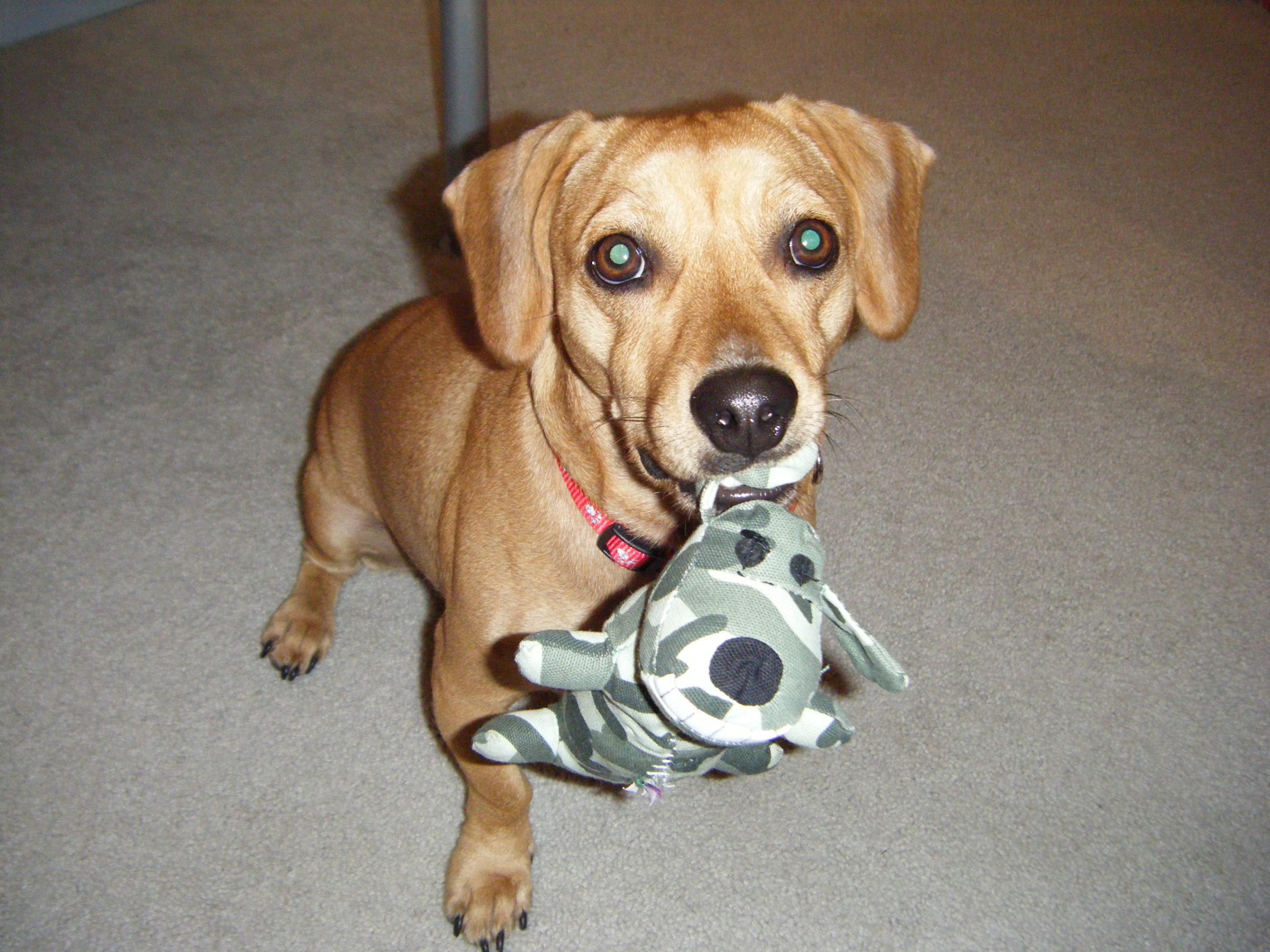 I LOVE my puppy!!!!-dscf0344.jpg