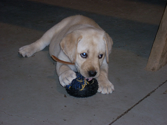 Critter pics / Pet Thread: Dial Up Beware-dscn0328_resize.jpg