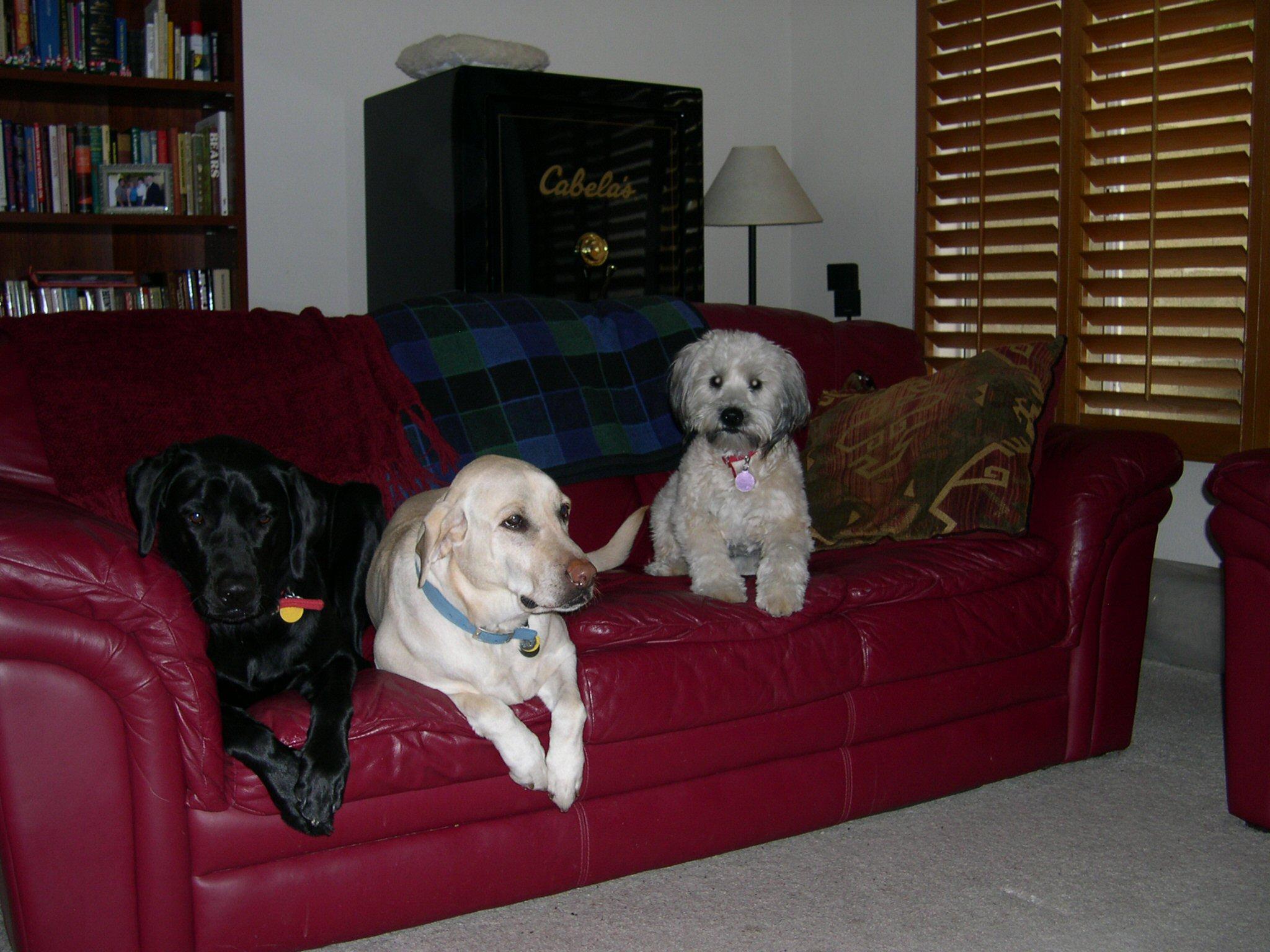Critter pics / Pet Thread: Dial Up Beware-dscn4051_rer.jpg
