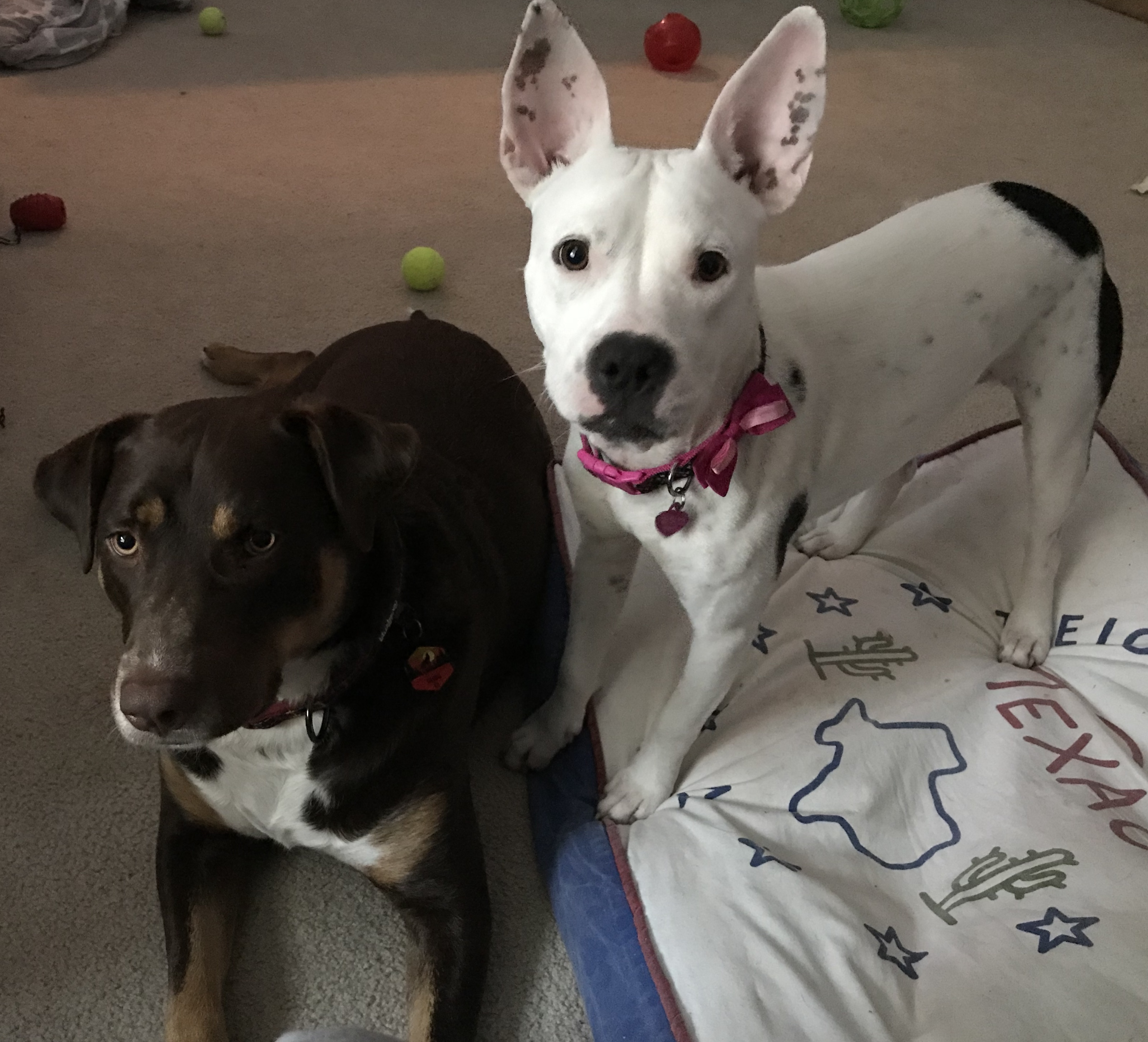 How About A Pet Picture Thread: Dogs, Cats, ...-e75c1f9c-1741-49fc-a6fa-970fbe86d3e4.jpeg
