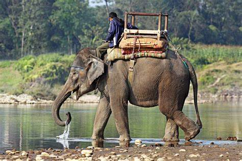 Name:  Elephant.jpg Views: 22 Size:  35.5 KB