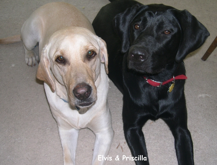 Labs love little girls-elvis-cilla.jpg