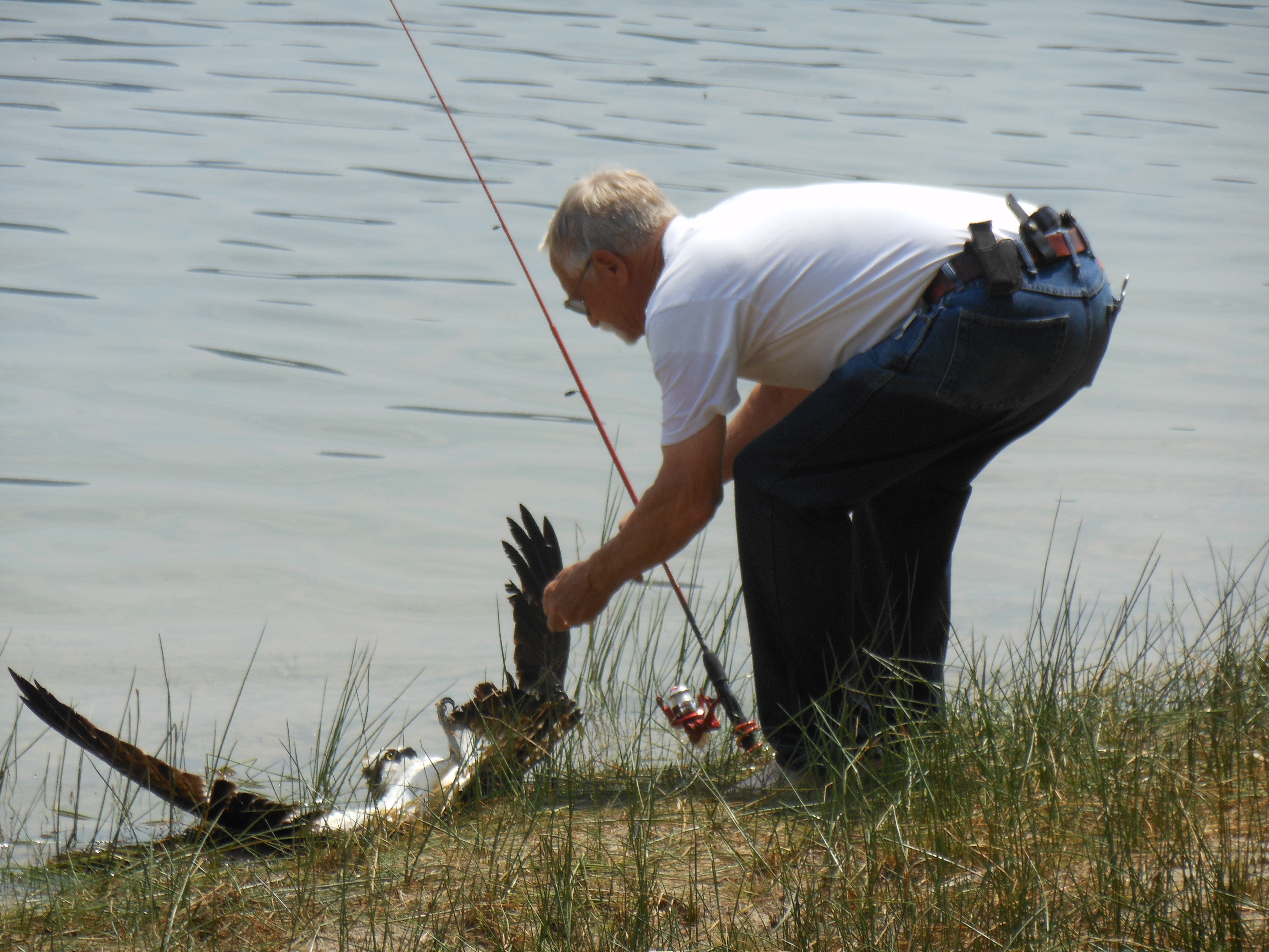 Osprey close and personal-fishing-osprey-036.jpg
