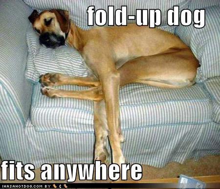 Just had a MAJOR incident-foldupdog.jpg