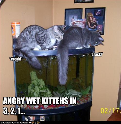 A purrfectly fun thread-funny-pictures-cat-angry-wet-kittehs.jpg
