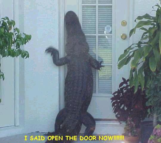 Let's see pics of the Turtle that guards your front door...-gator.jpg