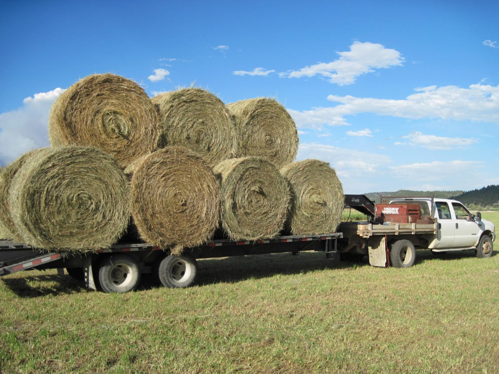 Show Us Your Truck-getting-hay-aug-21-2010-019-copy.jpg