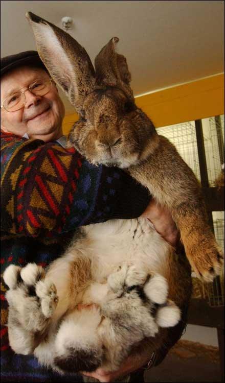 Why The Dog Ran Away-giant-bunny-732659.jpg