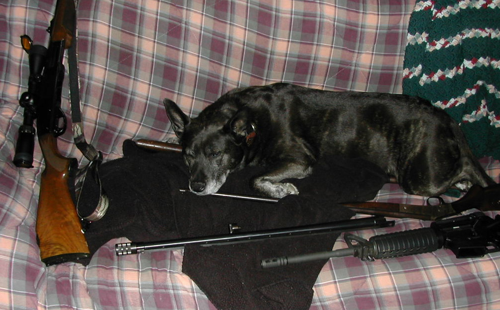 Let's see a picture of the dog that guards your family.-gunsafe002-1.jpg