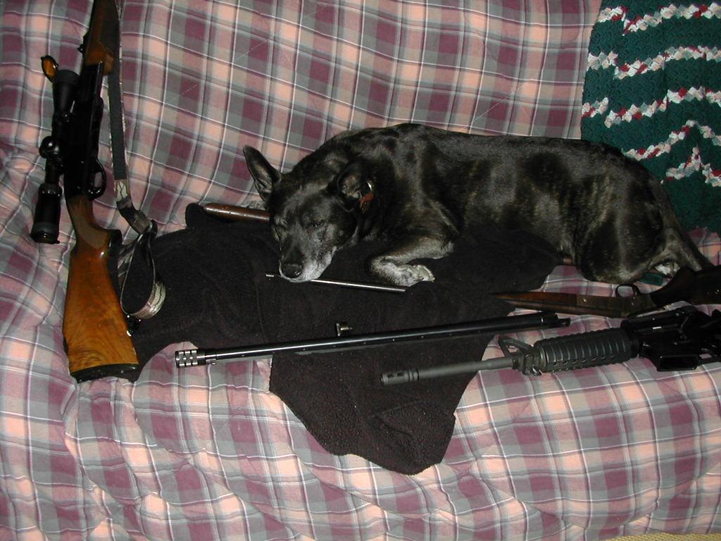 Critter pics / Pet Thread: Dial Up Beware-gunsafe002.jpg