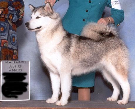 Guard dogs-hailey3.jpg