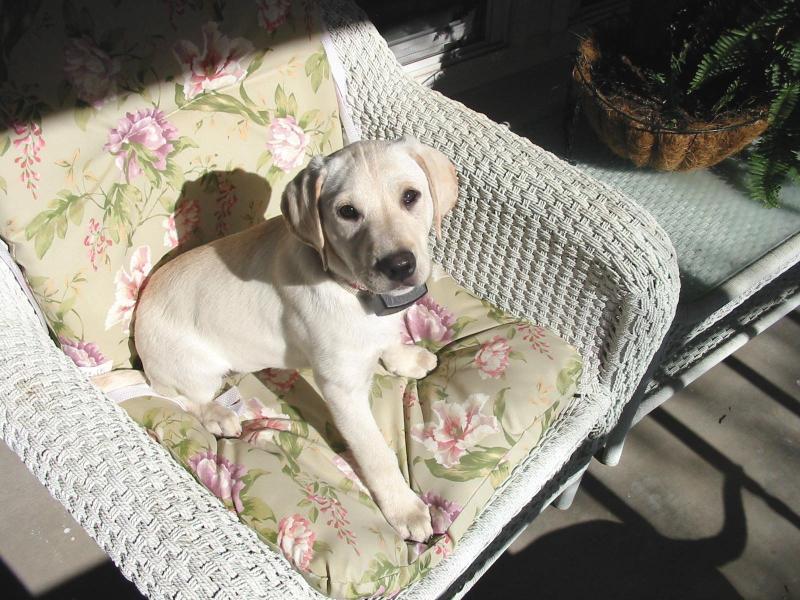 Critter pics / Pet Thread: Dial Up Beware-hallieonfrontporch-01132008.jpg
