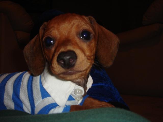 I LOVE my puppy!!!!-halloween-chewy-026.jpg