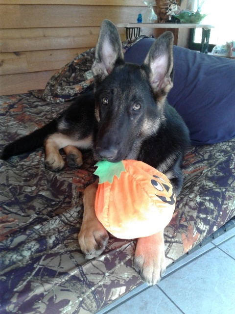 How About A Pet Picture Thread: Dogs, Cats, ...-halloweengsd.jpeg