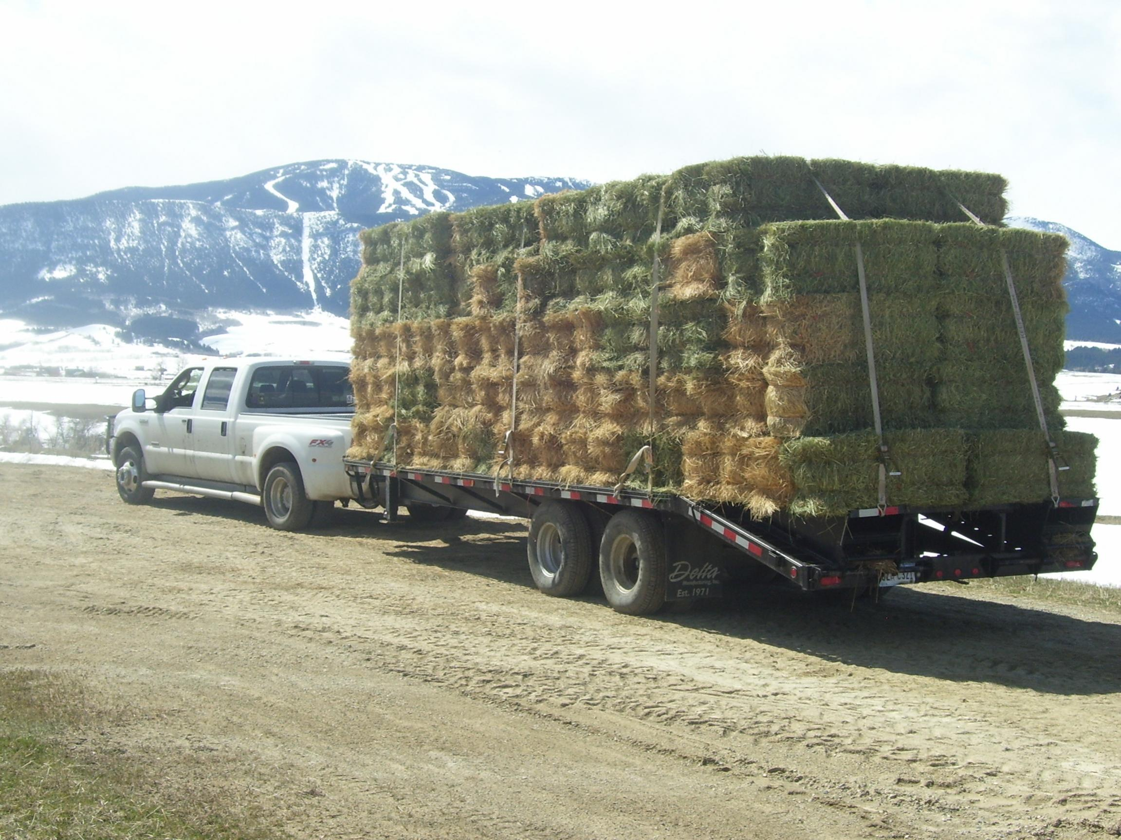 Show Us Your Truck-hay-13-april-09-003.jpg