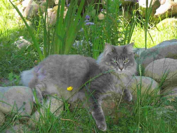 Critter pics / Pet Thread: Dial Up Beware-home-.jpg