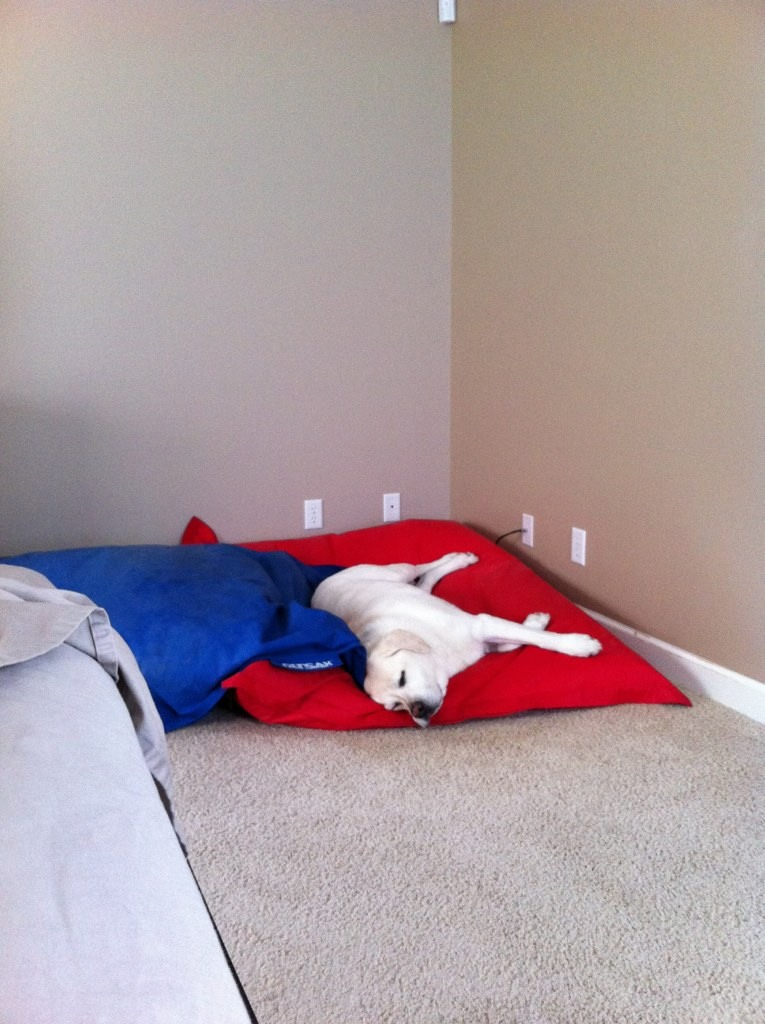 What kind of dog do you own? Are they a good watch/guard dog?-imageuploadedbytapatalk1355194258.685635.jpg