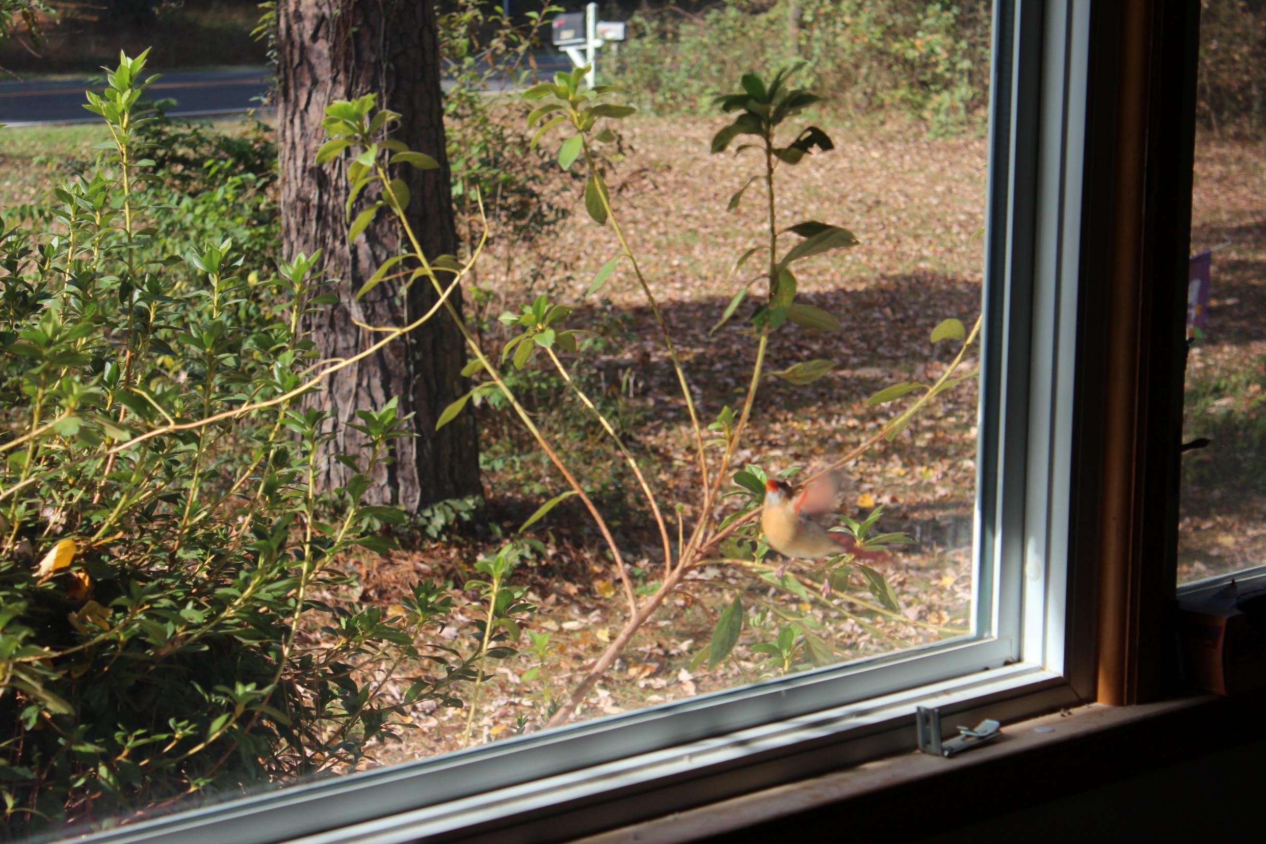 Strange tapping on window, peeping Tom???-img_0235.jpg
