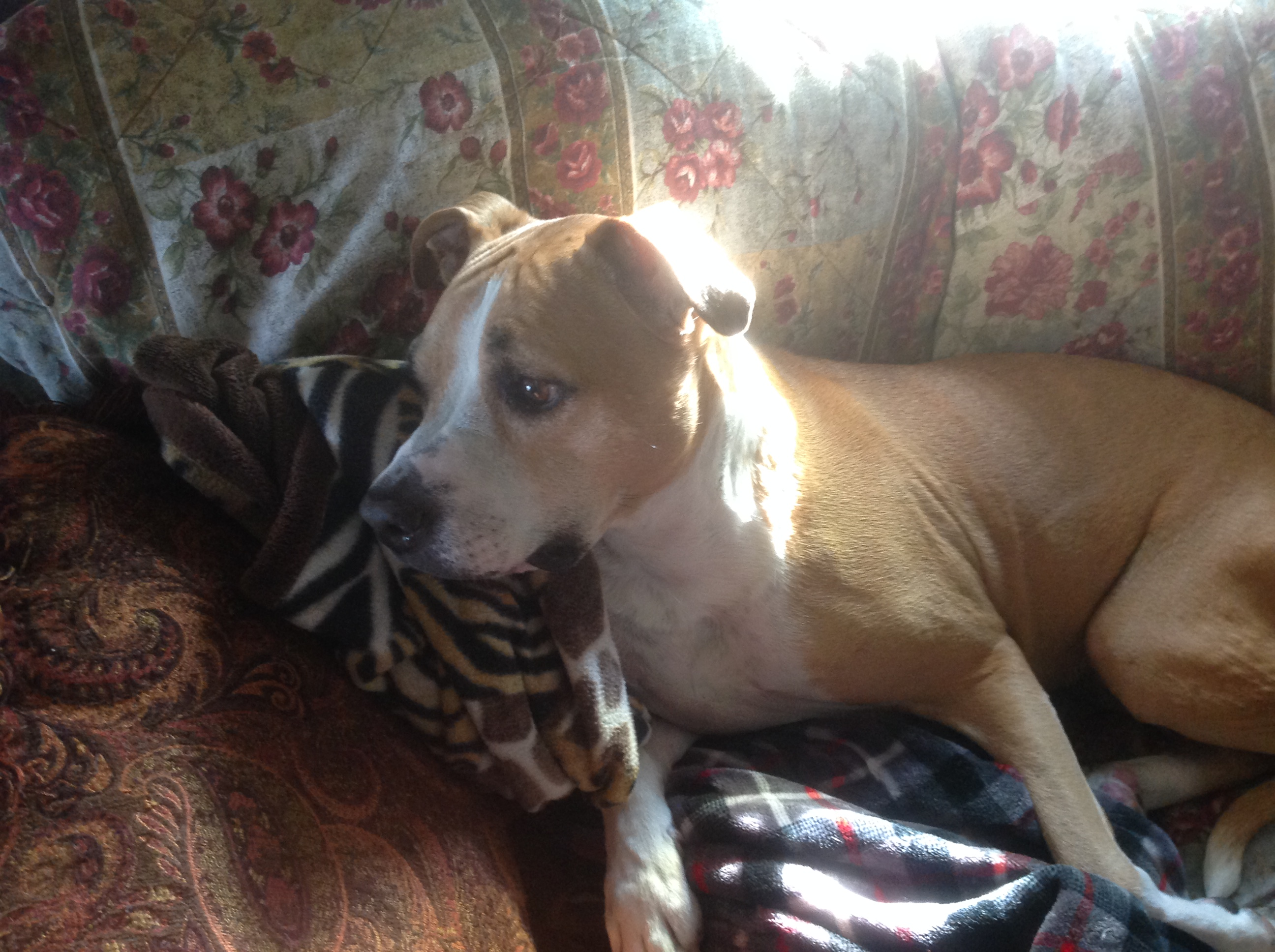 How About A Pet Picture Thread: Dogs, Cats, ...-img_0980.jpg