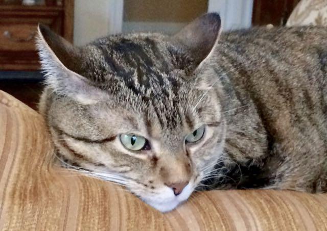 RIP Grumpy Cat-img_1006.jpg