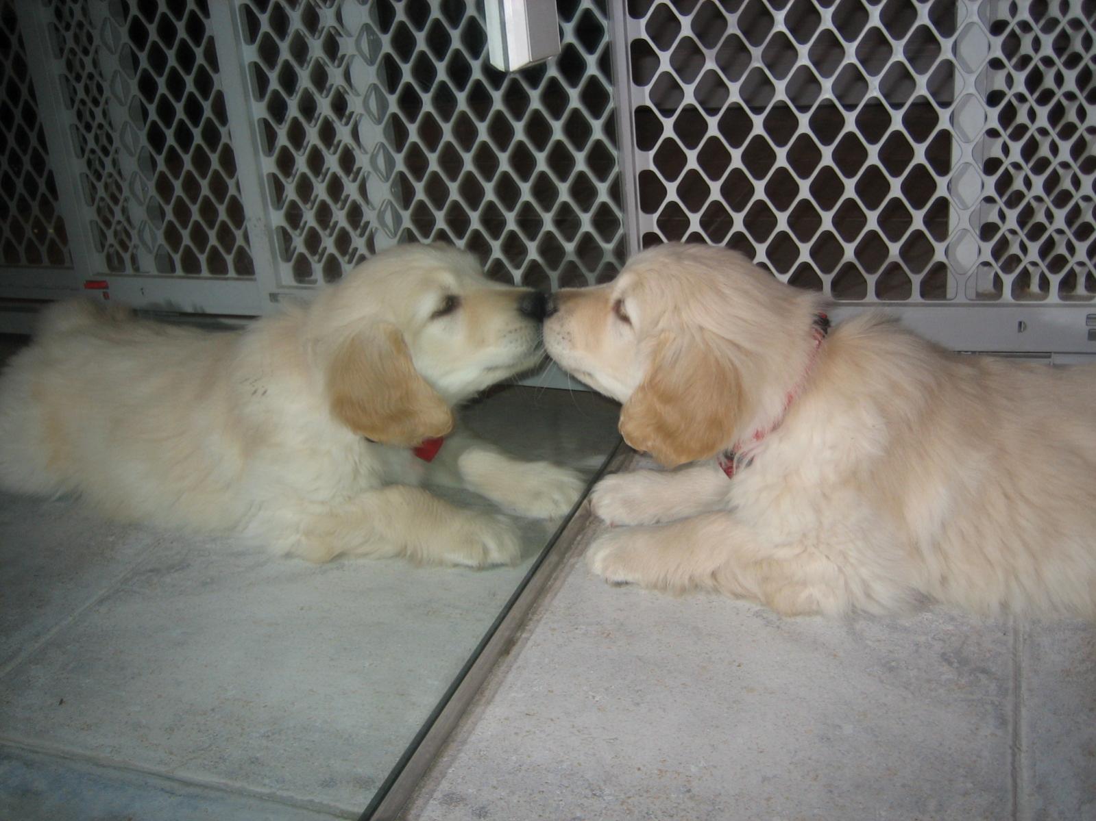 I LOVE my puppy!!!!-img_1061.jpg