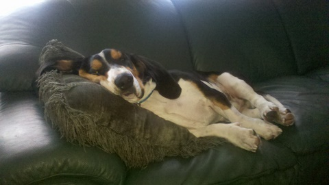 What kind of dog do you own? Are they a good watch/guard dog?-jackson-relaxing.jpg
