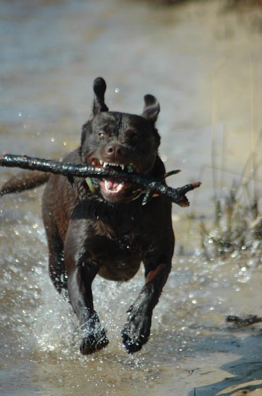 Critter pics / Pet Thread: Dial Up Beware-katie.jpg