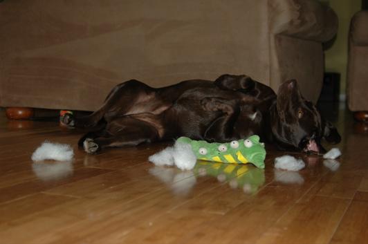 Critter pics / Pet Thread: Dial Up Beware-katie2.jpg